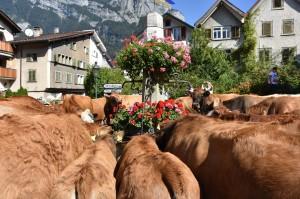 Kühe am Melser Dorfbrunnen