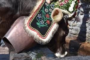 Kuh am Brunnen